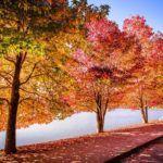 Mostra revela beleza do Lago São Bernardo em Porto Alegre