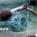 Calafia Art Store promove ações na Semana da Fotografia