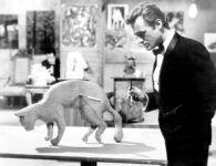 Sessão especial com filmes de Bruce Baillie e homenagem a Dick Miller na Cinemateca Capitólio